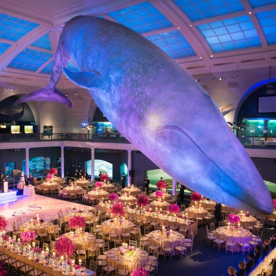 dinosaur chic celebration at the american museum of natural history rh insideweddings com